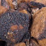 How Do You Find Chaga